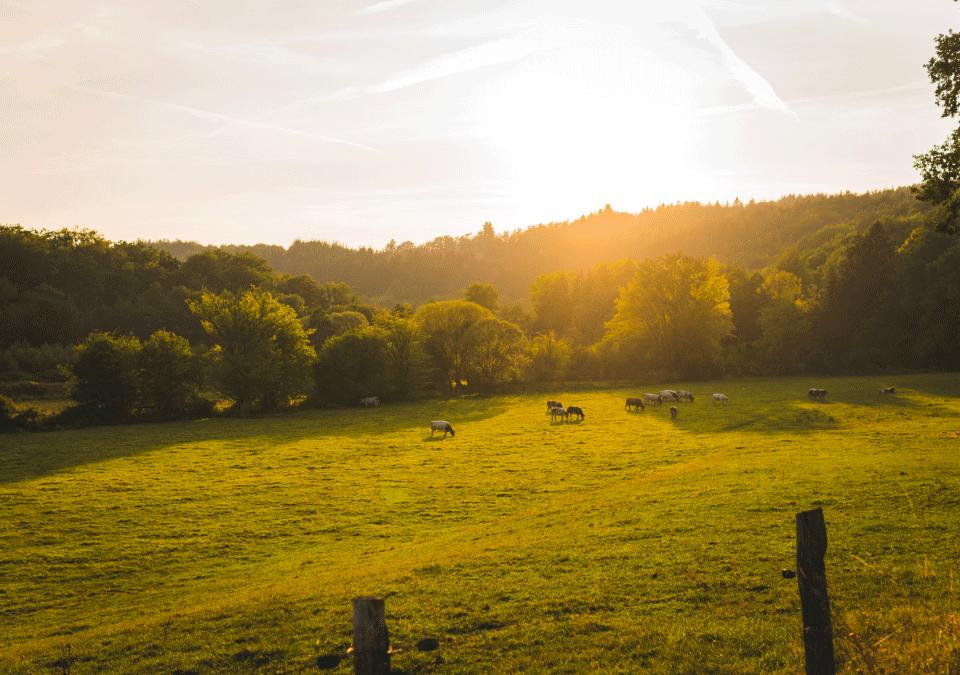 Vlaamse Ardennen Vakantiewoning